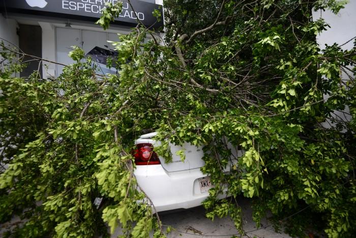 Rachas de viento provocan caída de árboles y anuncios en Xalapa