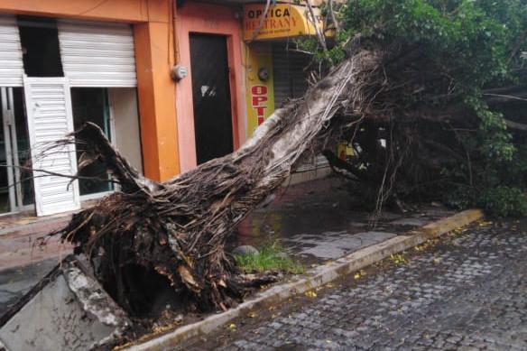 GALERÍA | Daños tras rachas fuertes de viento en Veracruz-Boca del Río