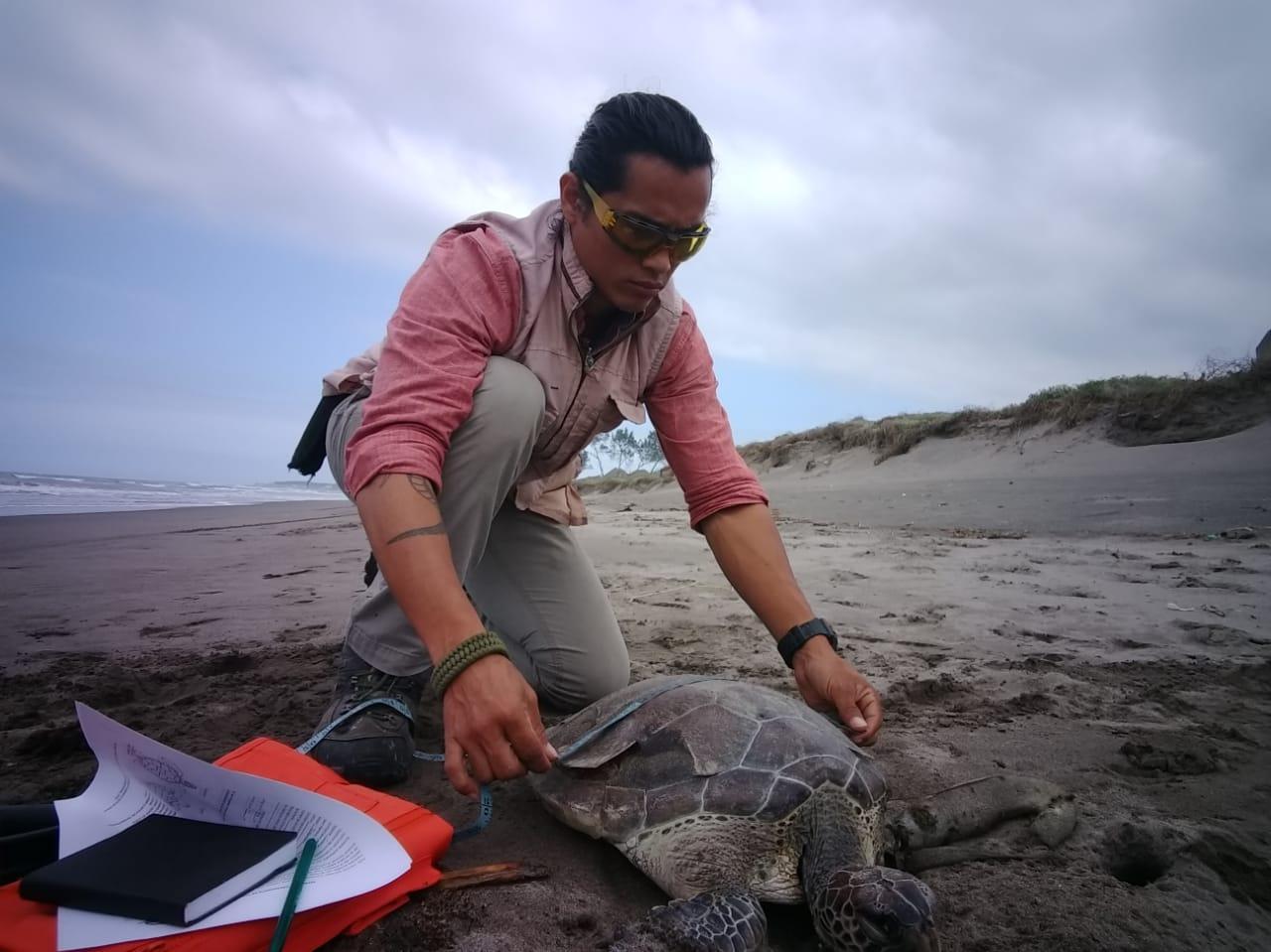 Hallan a más tortugas muertas en playa de Alvarado