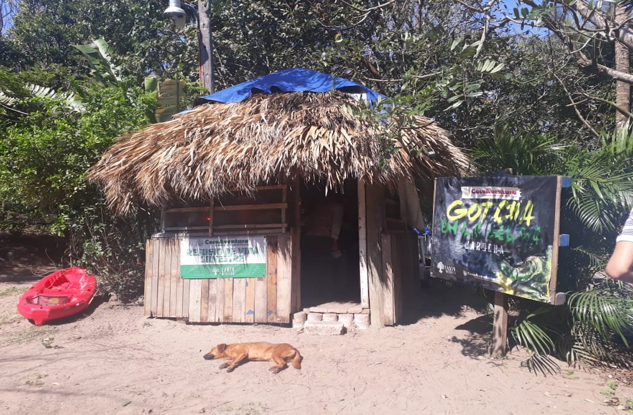 Earth Mission combate mercado negro con rescate de fauna silvestre en Veracruz