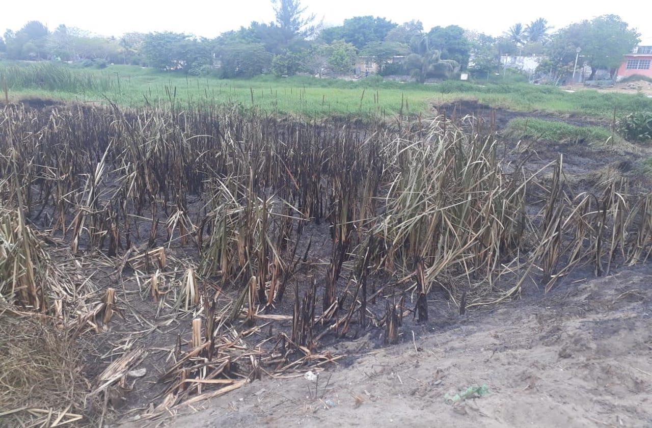 Procederán contra provocadores de incendios en lagunas de Veracruz