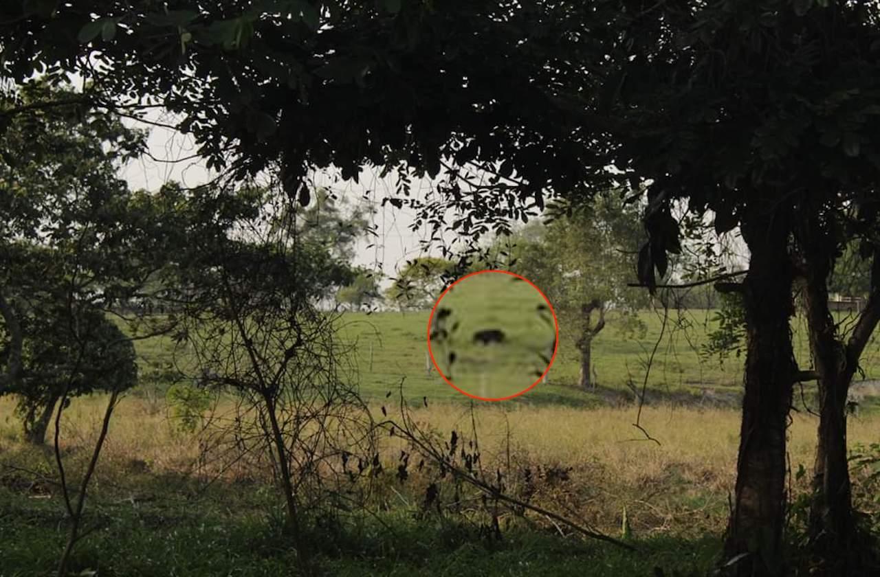 Pobladores de Oteapan avistan 3 jaguares negros