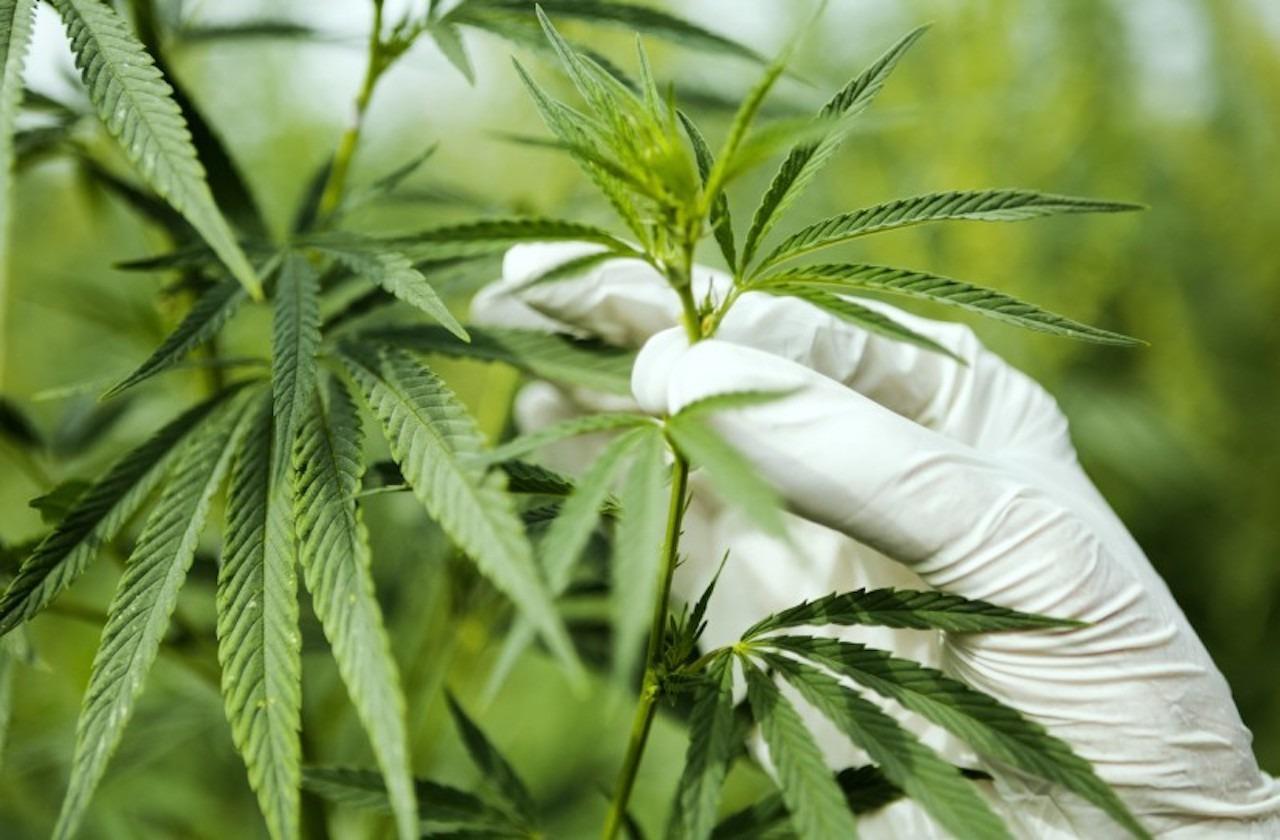 Consumo de cannabis y sedantes aumento en pandemia: ONU