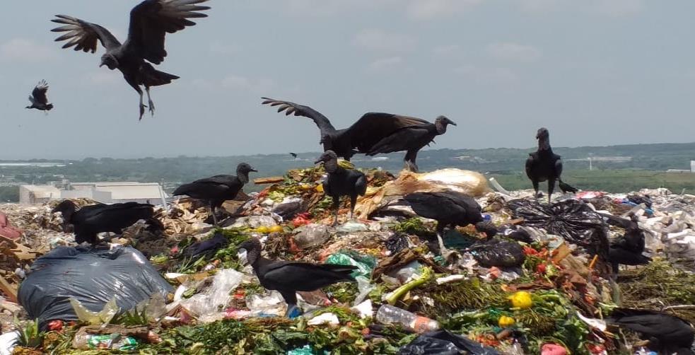 Multarían al Ayuntamiento de Veracruz por contaminación del relleno sanitario